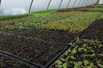 Sang Lee Farms Greenhouse