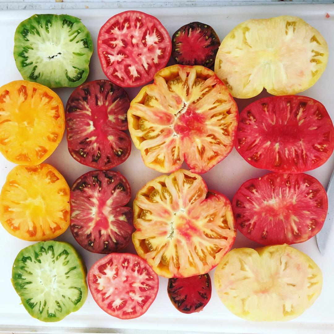 tomatoes-sanglee