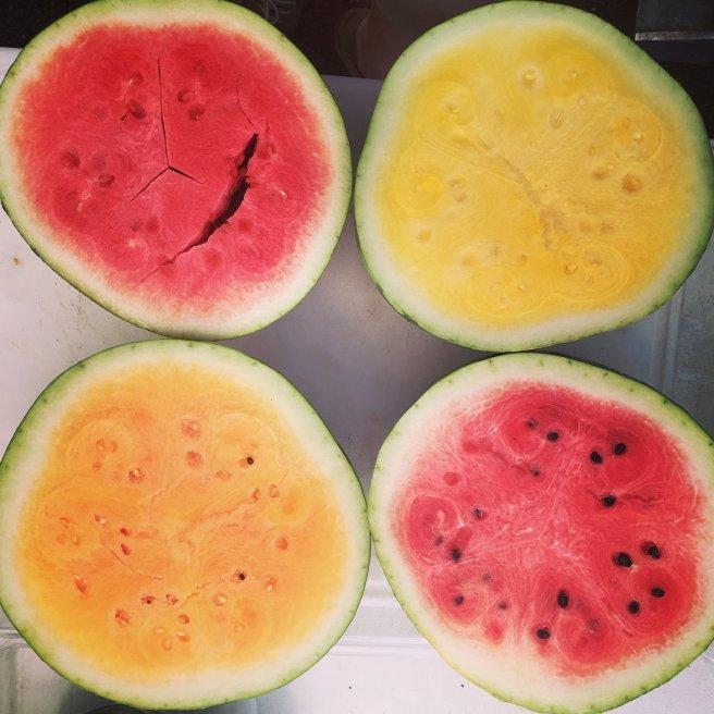 watermelon-sanglee